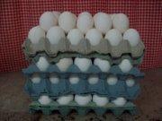 Granja Produccion Huevo Blanco