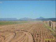 campo agrícola en opetacion.- 350 has.