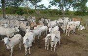Rancho de 5 mil hectáreas