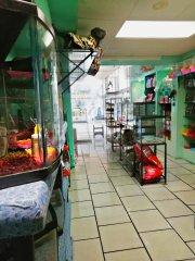 Traspaso tienda de mascotas acuario estética canina