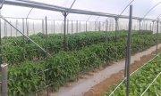 tubos agroindustriales