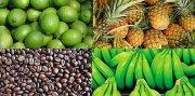 Compania Agroindustrial busca financiamiento con inversionista. Excelente esquema de inversion.
